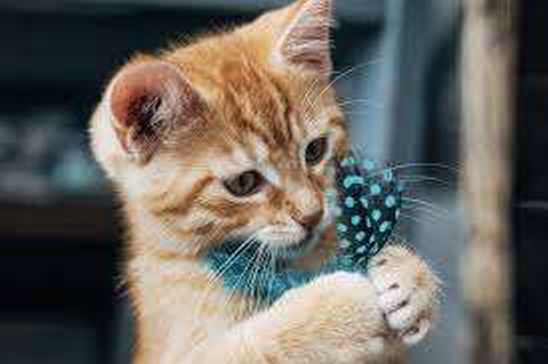 Kitten photography